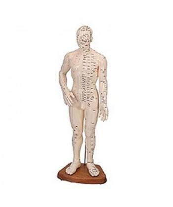 Cuerpo Humano Masculino (Caucho 46 Cm.)