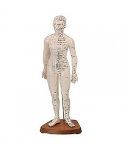 Cuerpo Humano Femenino (Caucho 48Cm.)