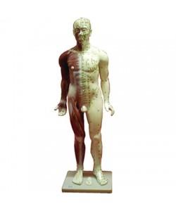 Cuerpo Humano Masculino. (Fibra 84 Cm.)