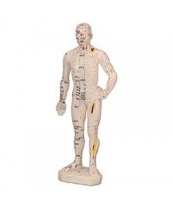 Cuerpo Humano Masculino (Caucho 26 Cm.)