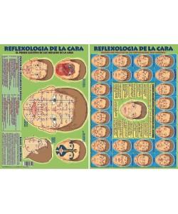 RELFEXOLOGIA DE LA CARA